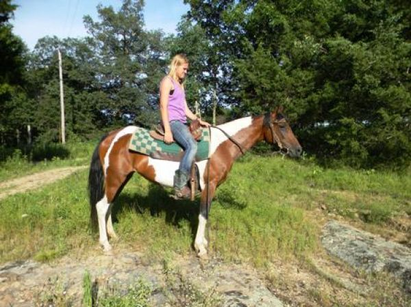 Tobiano Spotted Saddle Mare