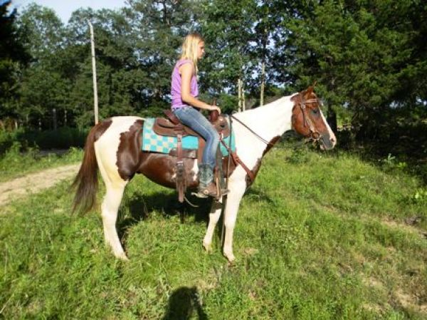 Tobiano Quarter Horse for Sale in Missouri