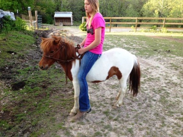 Pinto Pony Horse for Sale in Missouri