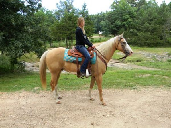 Palomino Paint Horse for Sale in Missouri