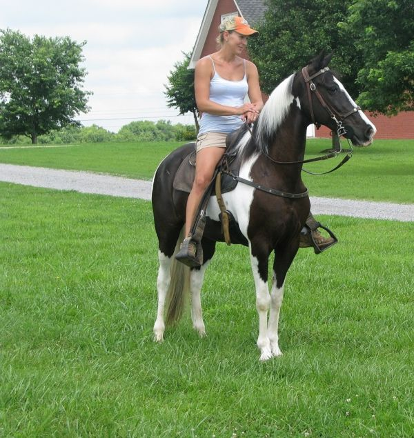 Black Spotted Saddle Horse for Sale in Alabama