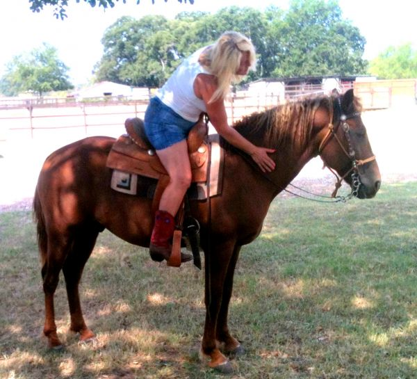Sorrel Bashkir Curly Stallion for Sale in Texas