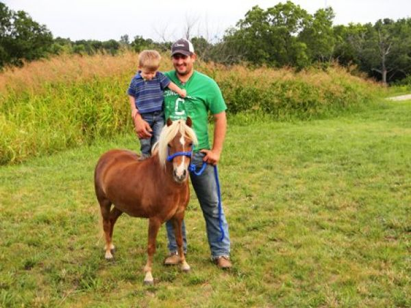 Sorrel Pony Horse for Sale in Missouri