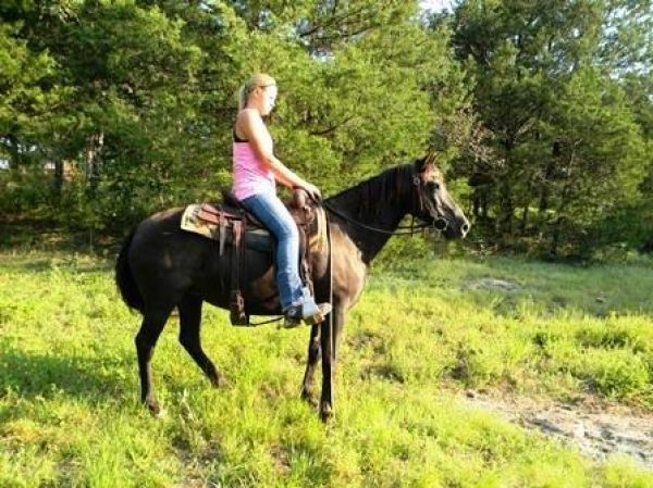 Black Quarter Pony Mare