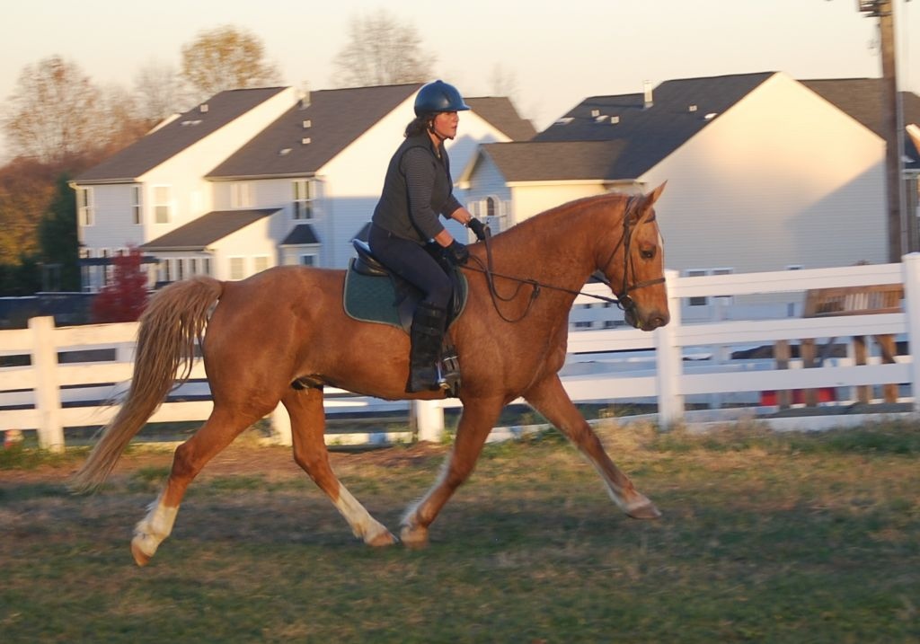Palomino Mountain Pleasure Gelding