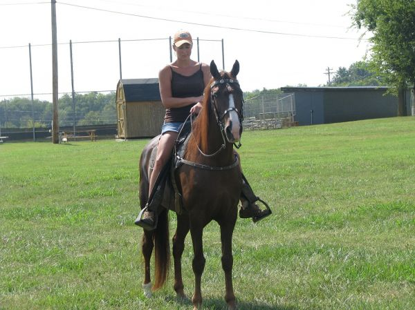 Liver Chestnut Tennessee Walking Horse for Sale in Alabama