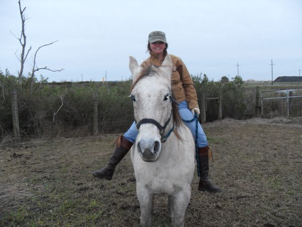 Grey Quarter Horse for Sale in Texas