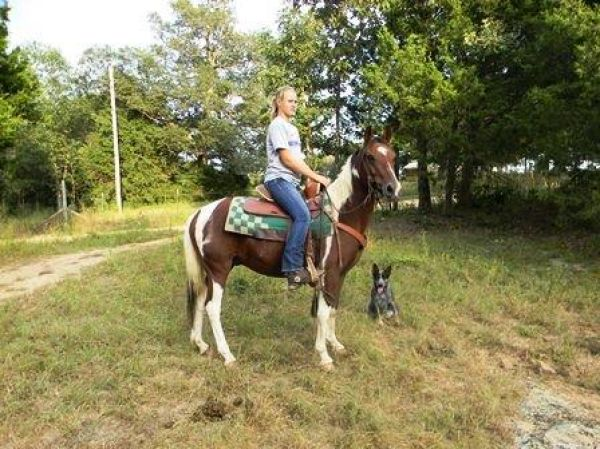Tobiano Paint Pony Horse for Sale in Missouri