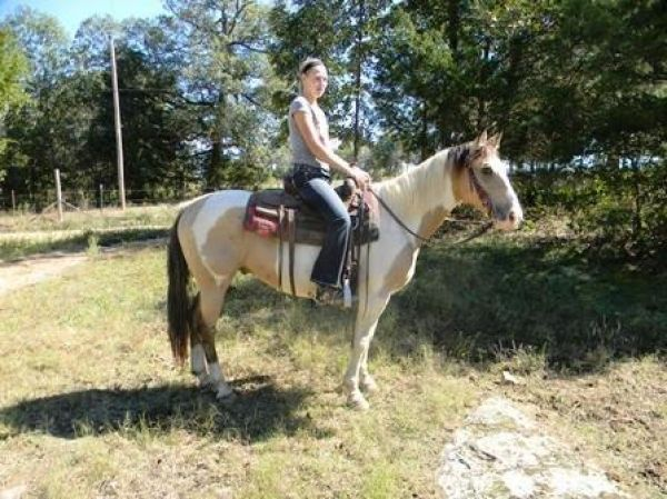 Buckskin Paint Horse for Sale in Missouri