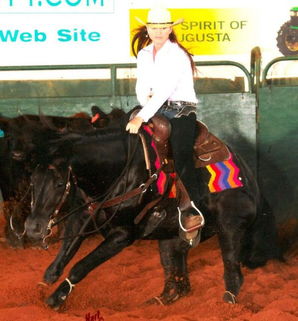 Black Quarter Horse Stallion for Sale in South Carolina