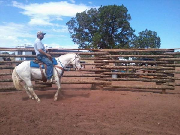 Cremello Quarter Horse Stallion for Sale in Arizona