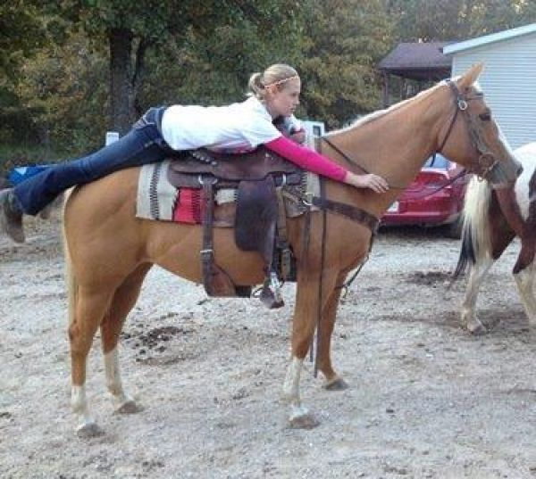 Palomino Horse for Sale in Missouri