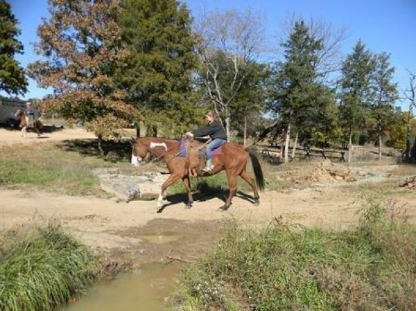 Pinto Paint Horse for Sale in Missouri