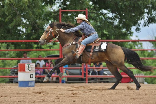 Buckskin Missouri Fox Trotter Stallion for Sale in Wyoming