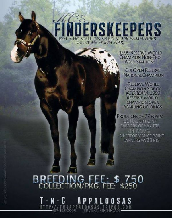 Bay Appaloosa Stallion for Sale in Michigan