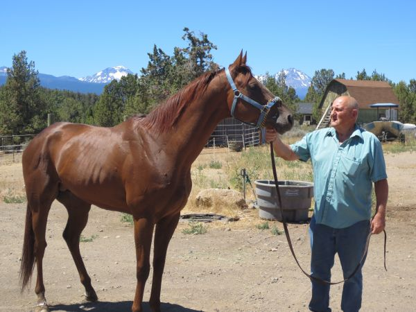 Chestnut Thoroughbred Stallion for Sale in Oregon