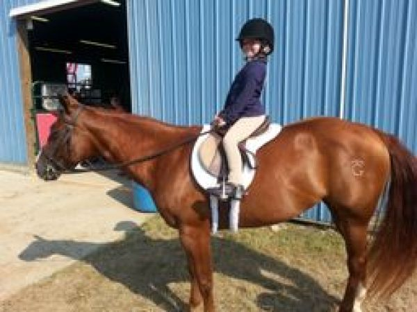 Chestnut Quarter Horse for Sale in Michigan