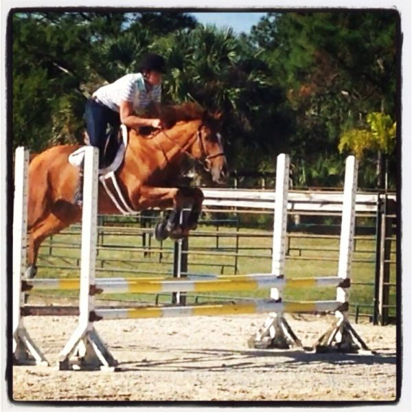Chestnut Thoroughbred Horse for Sale in Florida