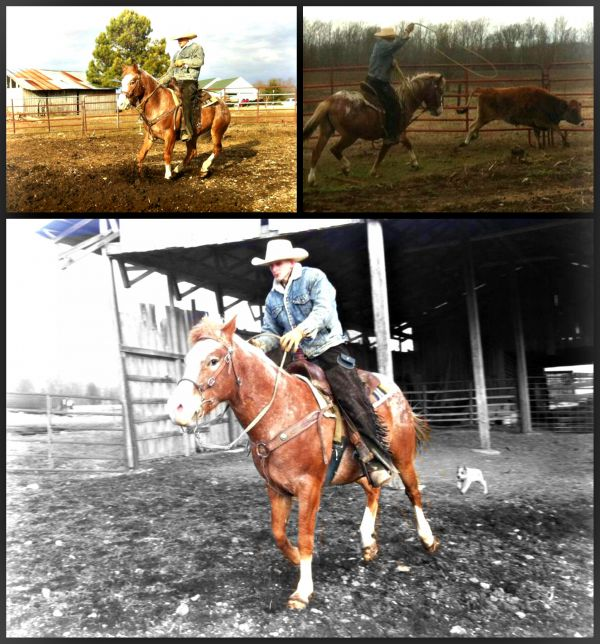 Red Roan Appaloosa Stallion for Sale in Tennessee