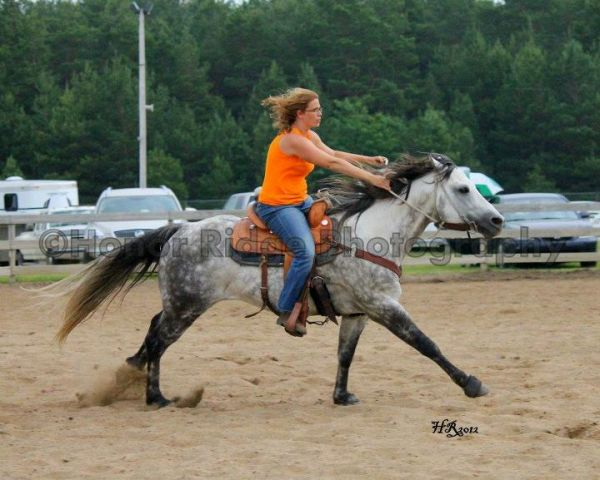 Grey Quarter Horse Stallion for Sale in Michigan