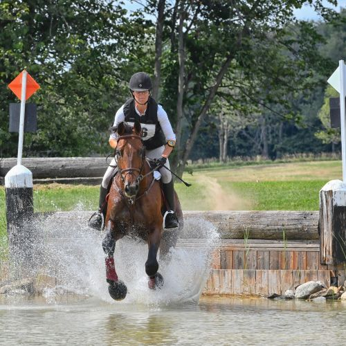 Bay Dutch Warmblood Stallion for Sale in Ontario