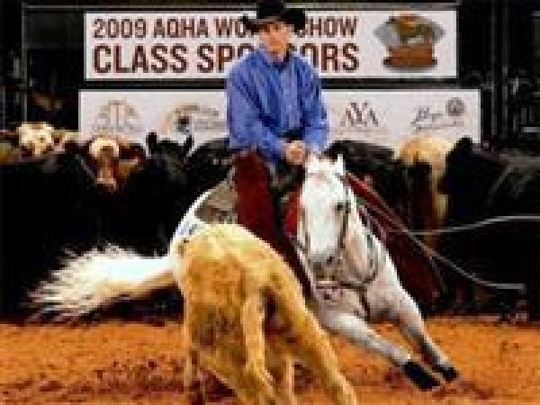 Grey Quarter Horse Stallion for Sale in Tennessee