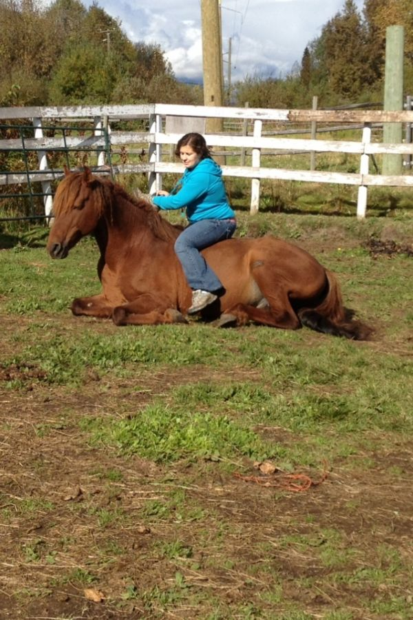 Chestnut Curly Stallion for Sale in British Columbia