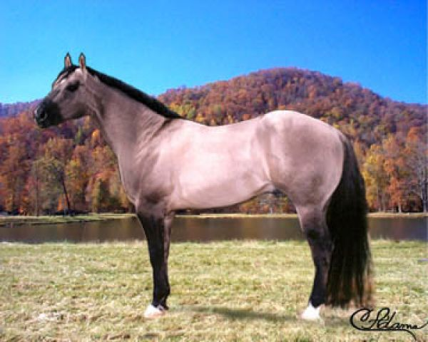 Grulla Quarter Horse Stallion for Sale in North Carolina