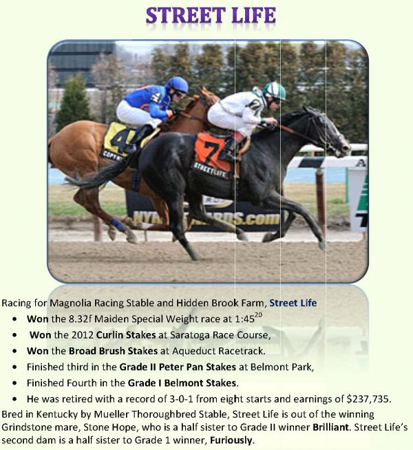 Bay Thoroughbred Stallion for Sale in California