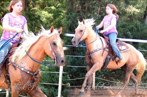 Palomino Quarter Horse for Sale in Texas