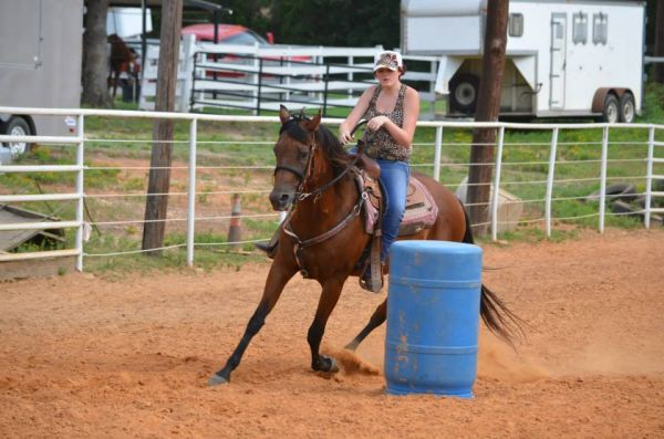 Bay Quarter Horse for Sale in Texas