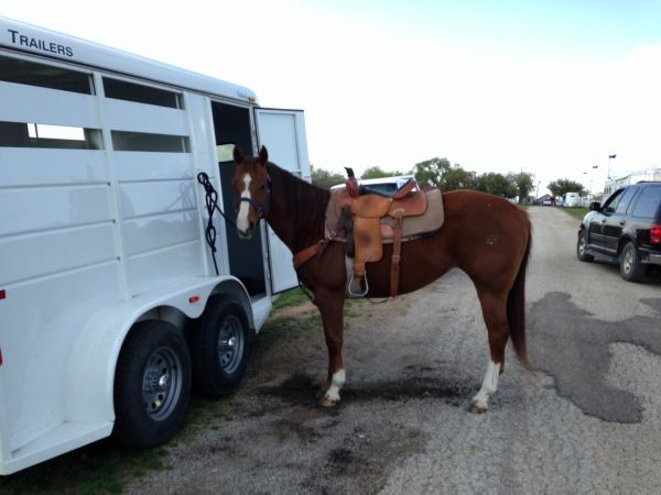 Sorrel Quarter Horse for Sale in Texas