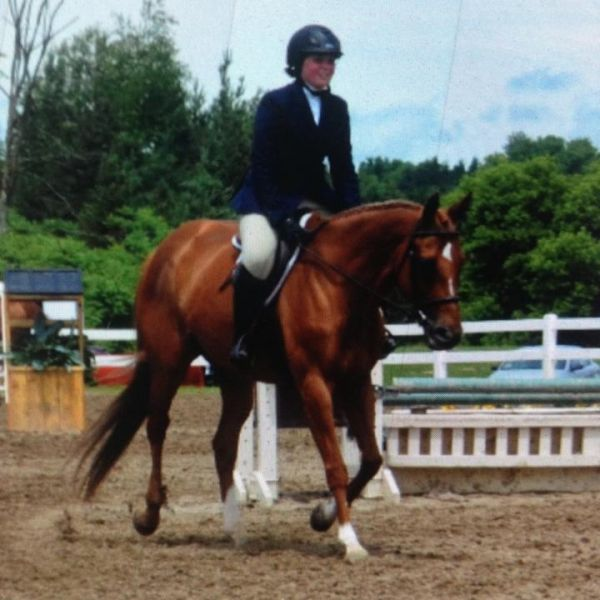 Chestnut Thoroughbred Horse for Sale in Ontario