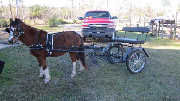 Sorrel Shetland Pony Horse for Sale in Florida