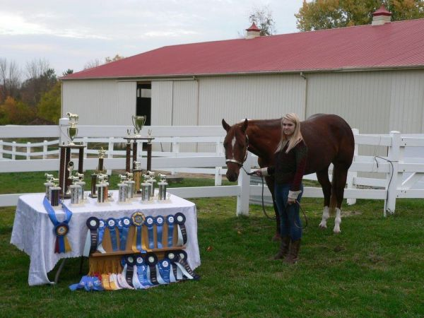 Sorrel Paint Horse for Sale in Ohio