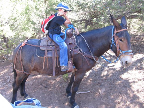 Black Mule Horse for Sale in Colorado