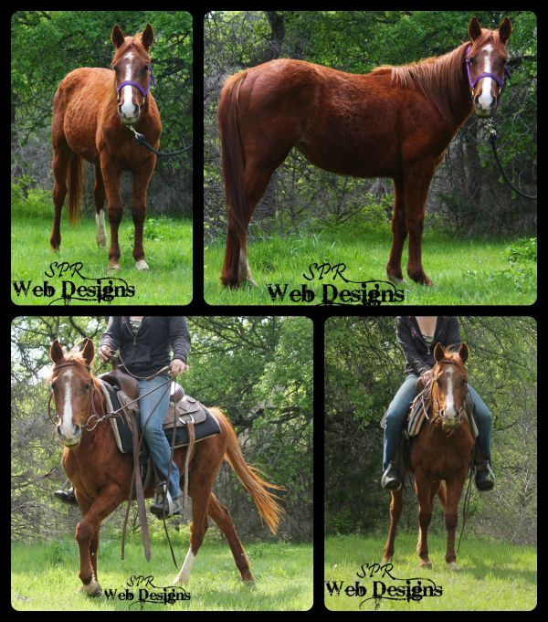 Chestnut Quarter Horse for Sale in Texas
