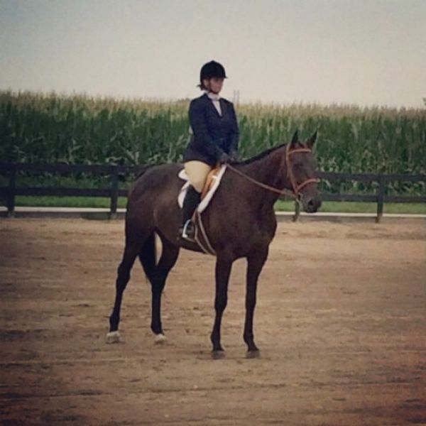 Bay Thoroughbred Horse for Sale in Indiana