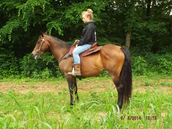 Brown Other Horse for Sale in Kentucky