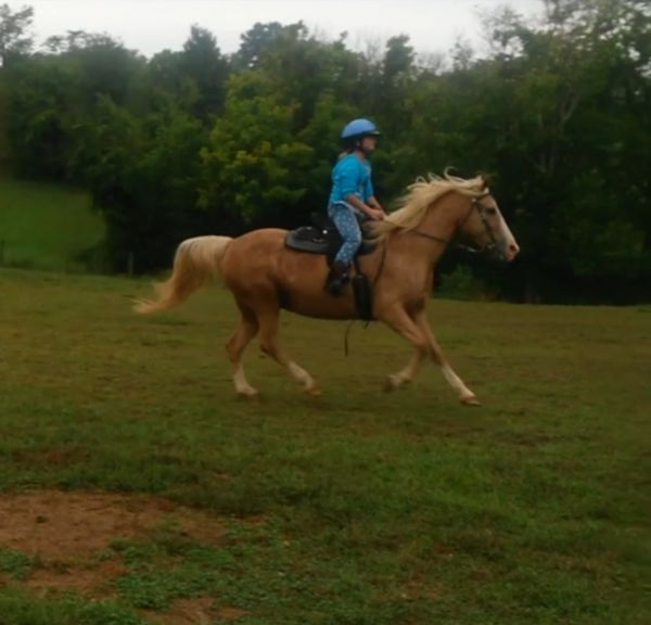 Palomino Tennessee Walking Mare