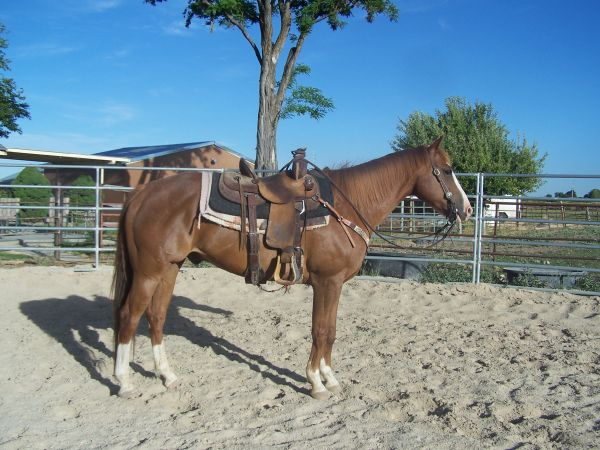Sorrel Quarter Horse for Sale in Idaho