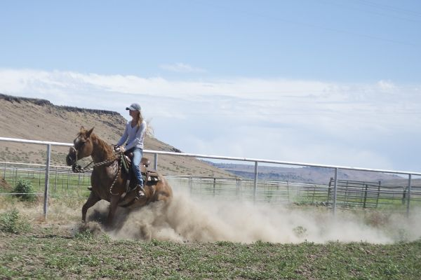 Red Roan Quarter Horse for Sale in Oregon