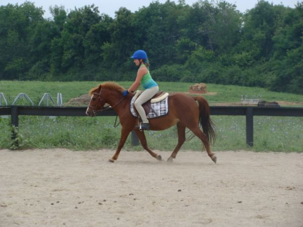 Sorrel Pony Horse for Sale in Kentucky