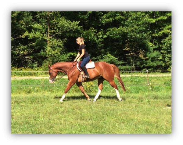 Sorrel Paint Horse for Sale in New Hampshire