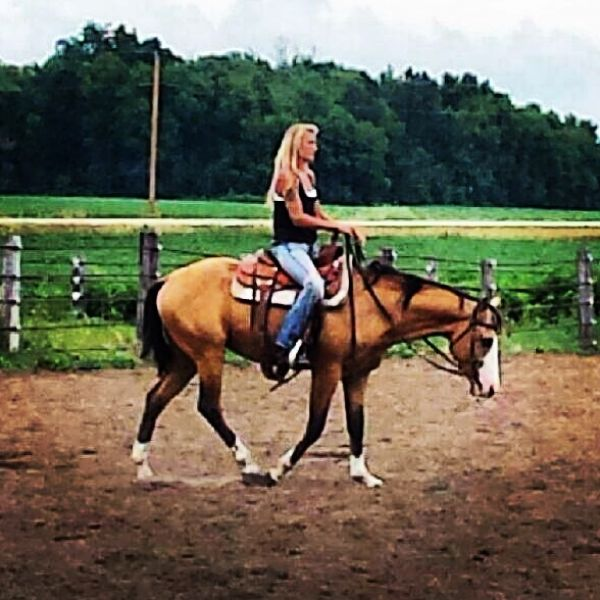 Buckskin Quarter Horse Stallion for Sale in Wisconsin