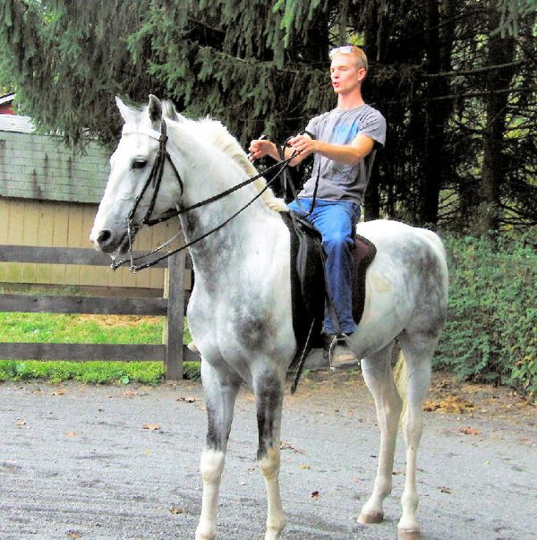 Pinto Saddlebred Horse for Sale in Maryland