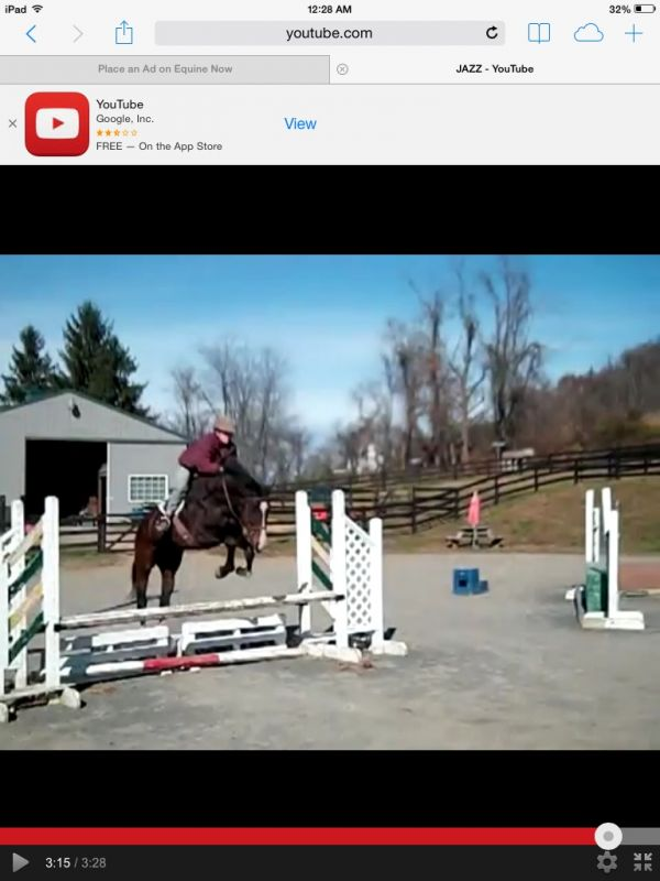 Bay Thoroughbred Horse for Sale in Virginia