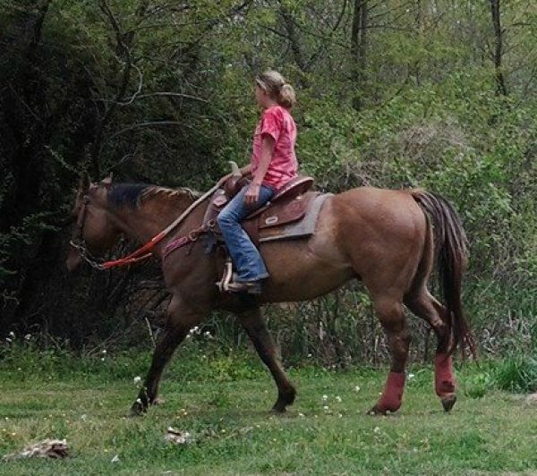 Dun w/ Blk Points Quarter Horse for Sale in Kentucky
