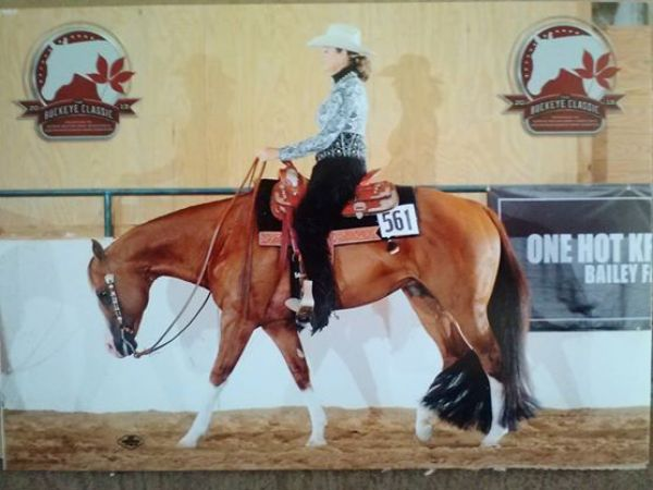 Sorrel Quarter Horse Stallion for Sale in New York