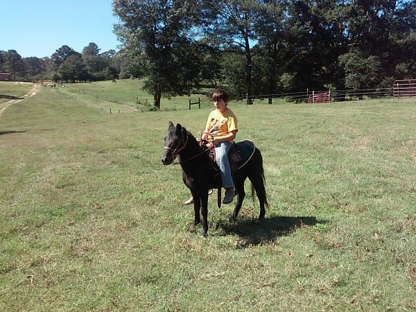Black Pony Horse for Sale in Mississippi